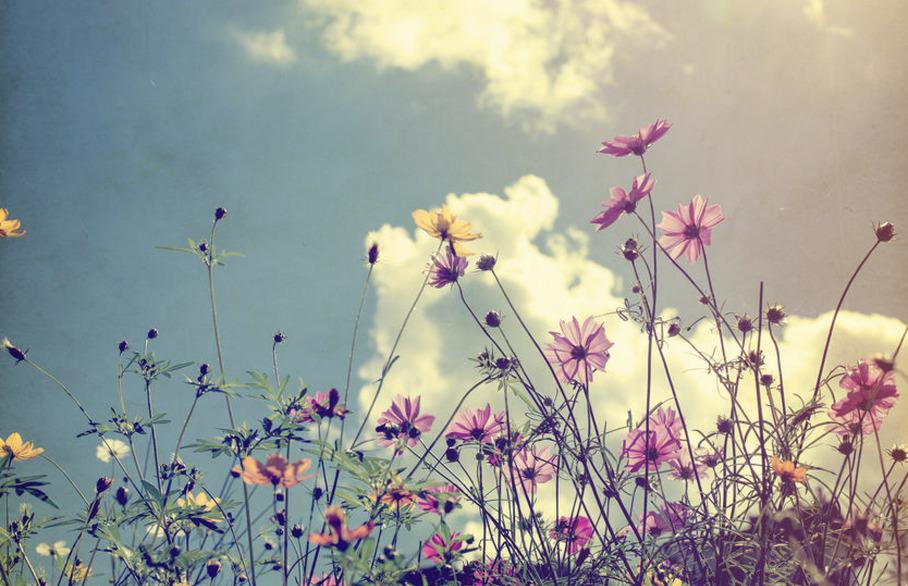 Wilding your garden
