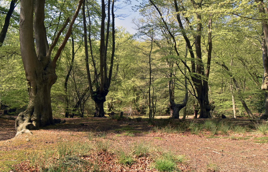 Echoes of Epping Forest
